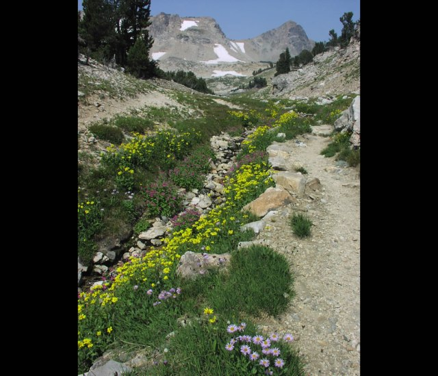 Paintbrush-Canyon-trail-with-wildflowers
